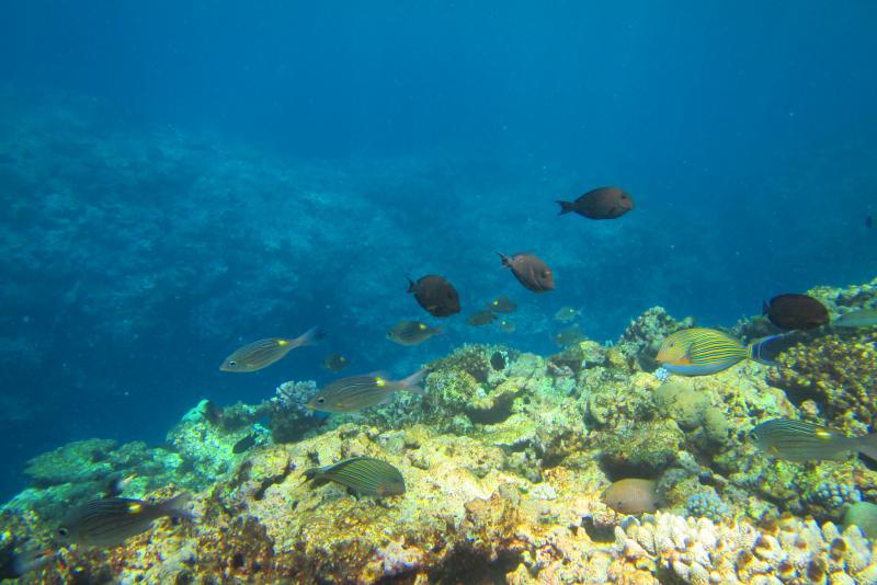 Aqualagoon