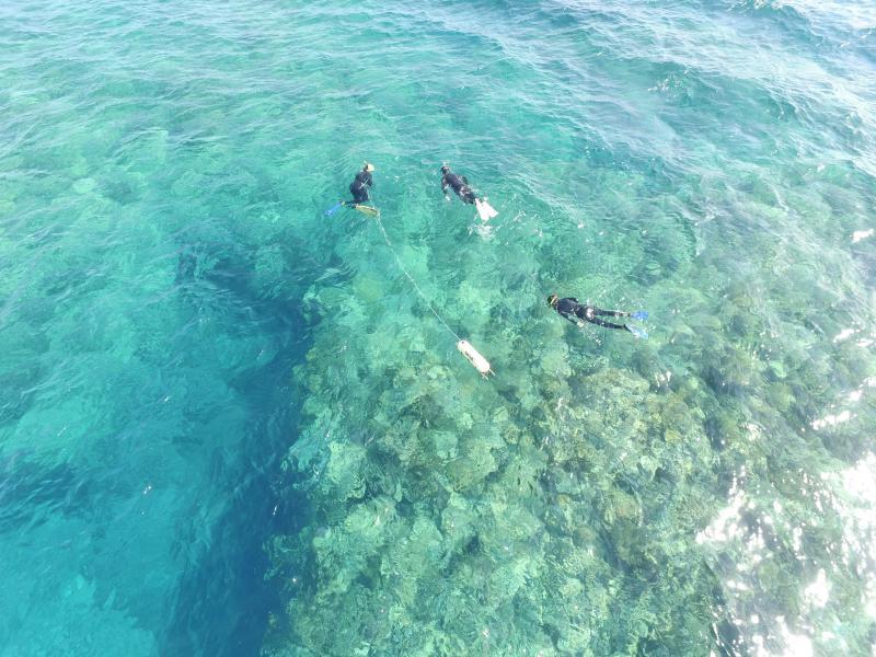 Randonnée palmée guidée sur le récif