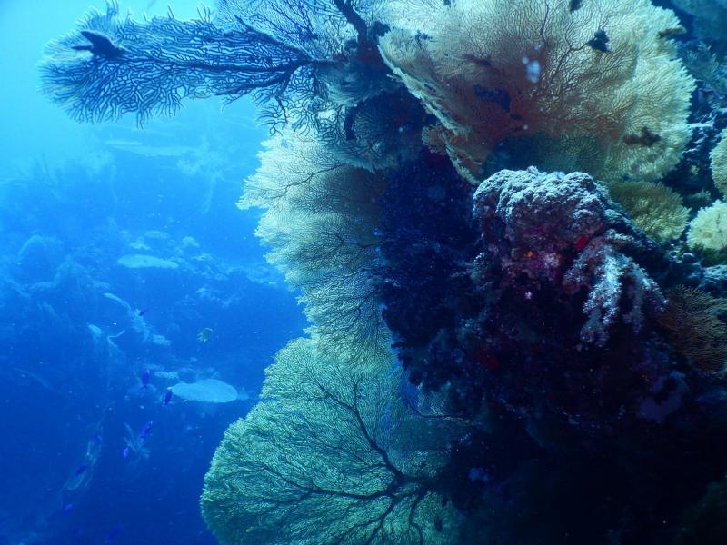 Tiéti Diving
